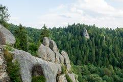 在森林中的大岩石 免版税库存图片