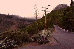 在森林中的有雾的路山的 免版税库存照片