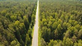 在森林中的高速公路 股票录像