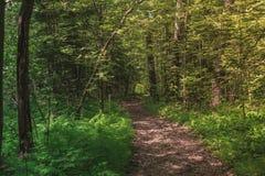 在森林中间的明亮的晴朗的夏天路 免版税库存照片