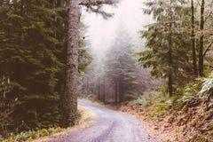 在森林中间的狭窄的弯曲的路 库存图片