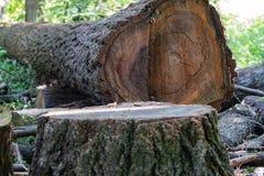 在森林中间的砍的树 库存照片