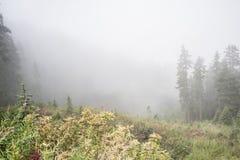 在森林中间的草坪 库存照片