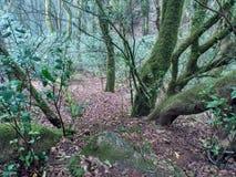 在森林中间的被忘记的树 免版税库存照片