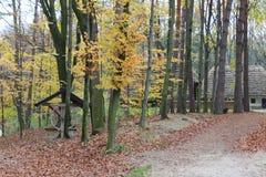 在森林中间的议院 免版税库存照片