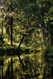 在森林中间的一个小池塘 免版税库存图片