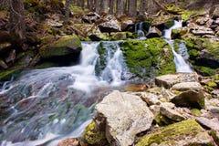 在森林中间的小瀑布 免版税库存图片