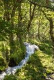 在森林中间的小瀑布 库存照片