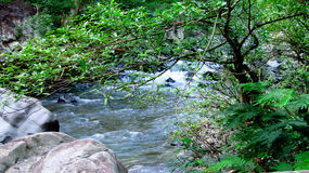 在森林中间的山河,在打横,西爪哇省,印度尼西亚 库存照片
