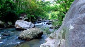 在森林中间的山河,在打横,西爪哇省,印度尼西亚 免版税库存图片