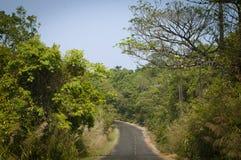 在森林中间的柏油路 库存照片