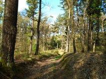在森林中间的森林公路 免版税库存照片