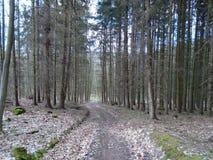 在森林中间的森林公路 库存图片