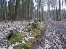 在森林中间的森林公路 库存照片