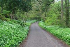 在森林中间的步行方式 免版税库存照片