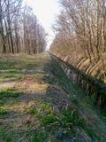 在森林中间的河小河有新鲜的绿色叶子的 图库摄影