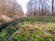 在森林中间的河小河有新鲜的绿色叶子的 库存图片