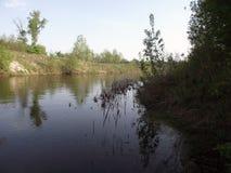 在森林中间的河 免版税库存照片