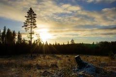 在森林中间的清楚击倒的区域 免版税库存照片
