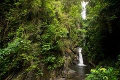 在森林中间的美丽的瀑布 库存图片