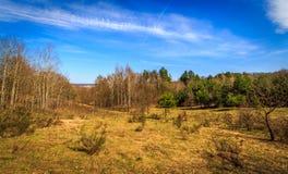 在森林中间的草甸 库存照片