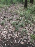 在森林中间的Gound,有很多叶子 免版税库存照片