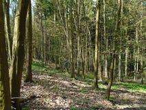 在森林中间 库存图片