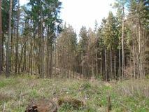 在森林中间 免版税库存图片