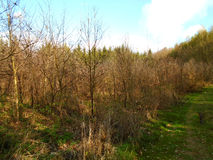 在森林中间 免版税库存照片