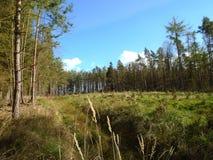 在森林中间 图库摄影