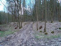 在森林中间 免版税图库摄影