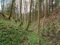 在森林中间 库存照片