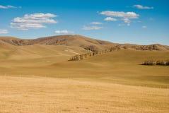 在森林之下的蓝色金黄草原天空 免版税库存照片
