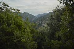 在森林之外:山 免版税库存照片