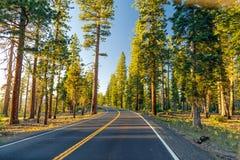 在森林之间的美丽的路在日落期间 在优胜美地国家公园加利福尼亚 免版税库存照片