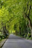 在森林之间的被铺的路 免版税库存照片