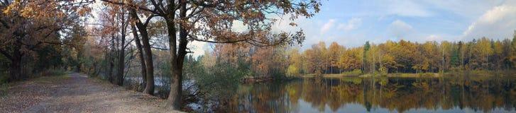 在森林全景的秋天 库存图片