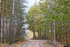 在森林公路的交叉路的森林风景 免版税库存照片