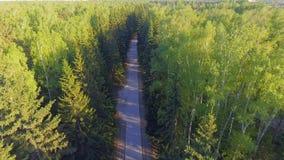 在森林公路的全景鸟瞰图从上面 使用寄生虫被采取的录影 在树的顶视图 在树中的方式 股票录像