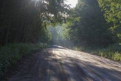在森林公路的太阳光芒 免版税图库摄影