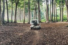 在森林公路的汽车SUV 库存照片