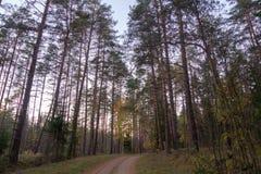 在森林公路的秋天 库存照片