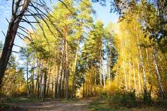 在森林公路的美好的秋天通过秋天混杂的森林 库存图片