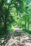 在森林公路的自行车 图库摄影