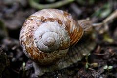 在森林公路的蜗牛,领域浅depht,被弄脏 库存照片