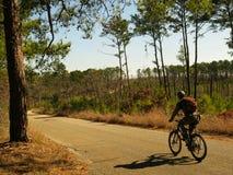 在森林公路的登山车车手 免版税库存图片