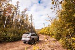 在森林公路的SUV 库存图片