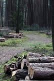 在森林公路附近的日志 库存图片