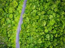 在森林公路风景的鸟瞰图 库存照片