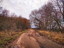 在森林农村秋天风景的乡下公路 免版税图库摄影
